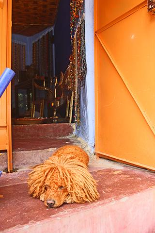 Perro tinte pelo naranja descanso puerta entrada casa bereber Valle Ourika Marruecos