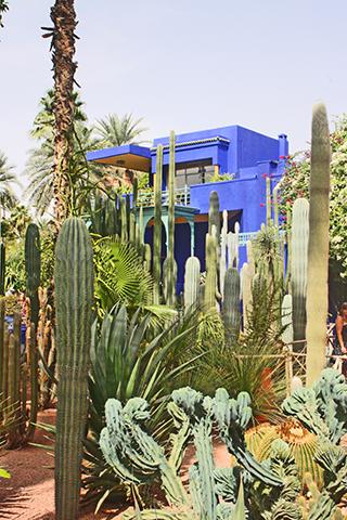 Cactus plantas Jardín Majorrelle Marrakech