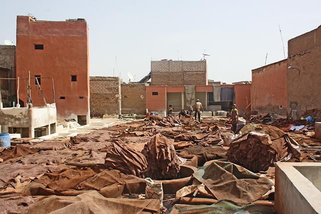 Pieles trabajadores marroquíes secando sol barrio curtidores Marrakech