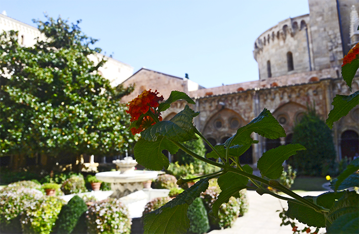 Flor roja plantas claustro Catedral Santa Tecla Seu Tarragona Cataluña