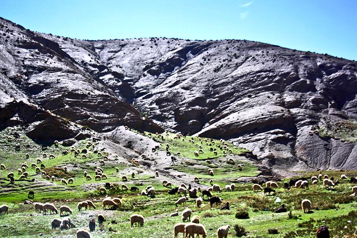 Paisaje ovejas comiendo prados montañas Atlas Marruecos