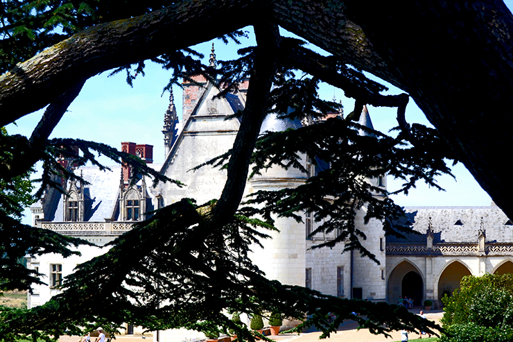 Ramas árboles castillo Amboise oculto Valle Loira Francia