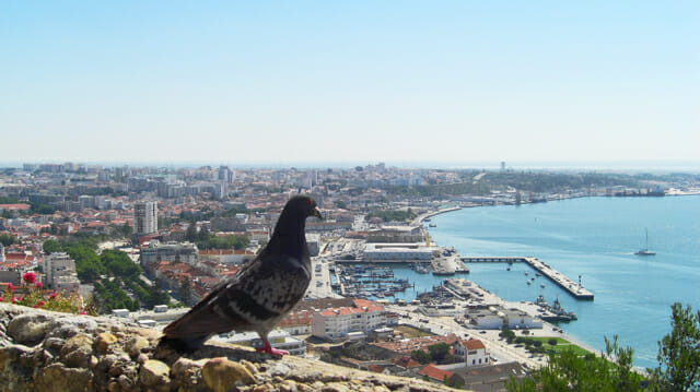 Paloma vistas castillo puerto ciudad Setúbal Portugal