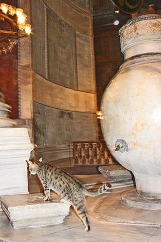 Gato interior Basílica Santa Sofía Estambul
