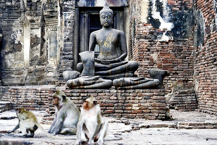 Escultura buda sentado oscuro templo monos Prang Sam Yod Lopburi
