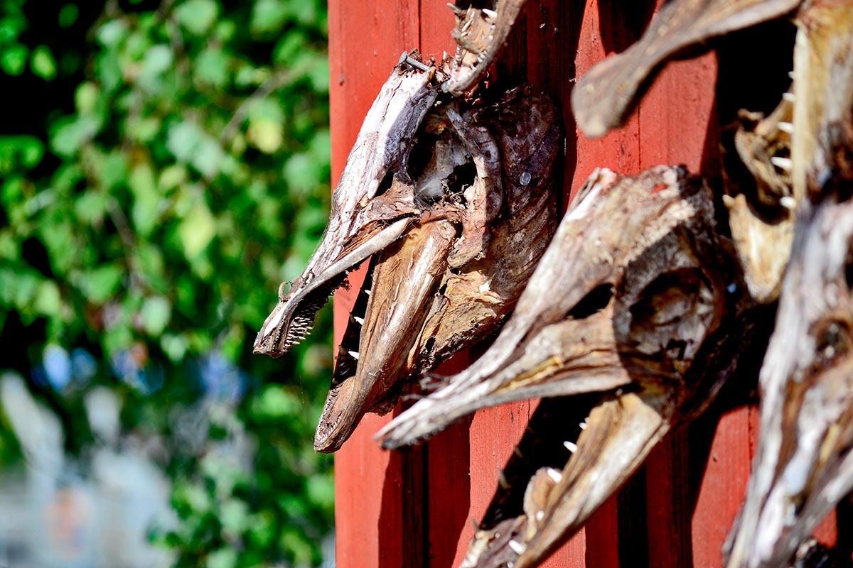 Cabezas disecadas animales colgando fachada madera roja Fjaderholmarna
